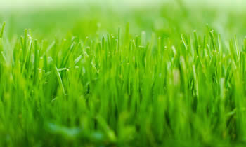 Lawn Service in Las Vegas NV Lawn Care in Las Vegas NV Lawn Mowing in Las Vegas NV Lawn Professionals in Las Vegas NV
