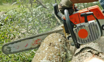 Tree Removal in Las Vegas NV Tree Removal Quotes in Las Vegas NV Tree Removal Estimates in Las Vegas NV Tree Removal Services in Las Vegas NV Tree Removal Professionals in Las Vegas NV Tree Services in Las Vegas NV
