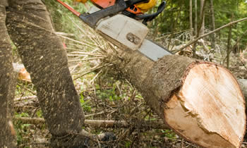 Tree Service in Las Vegas NV Tree Service Estimates in Las Vegas NV Tree Service Quotes in Las Vegas NV Tree Service Professionals in Las Vegas NV