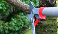 Tree Pruning Services in Las Vegas NV